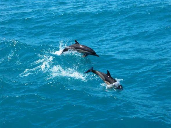 До месец започва преброяване популацията на делфини в Черно море