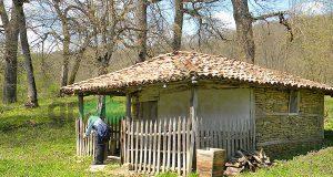 Природна забележителност Странджански дъб - местност Свети Илия