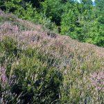 Защитена местност Пирен
