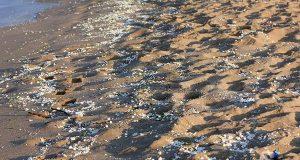 Палмово масло е замърсителя по плажовете