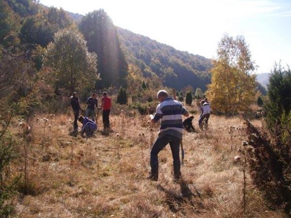 Млади фиданки от тис бяха засадени в Природен парк Странджа
