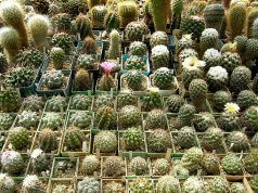 Ботаническа градина на семейство Серафимови