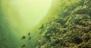 Черно море се превръща в блато