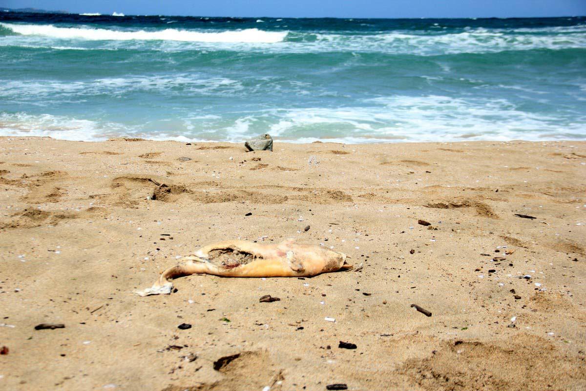 На умрели делфини продължават да се натъкват туристи по плажовете