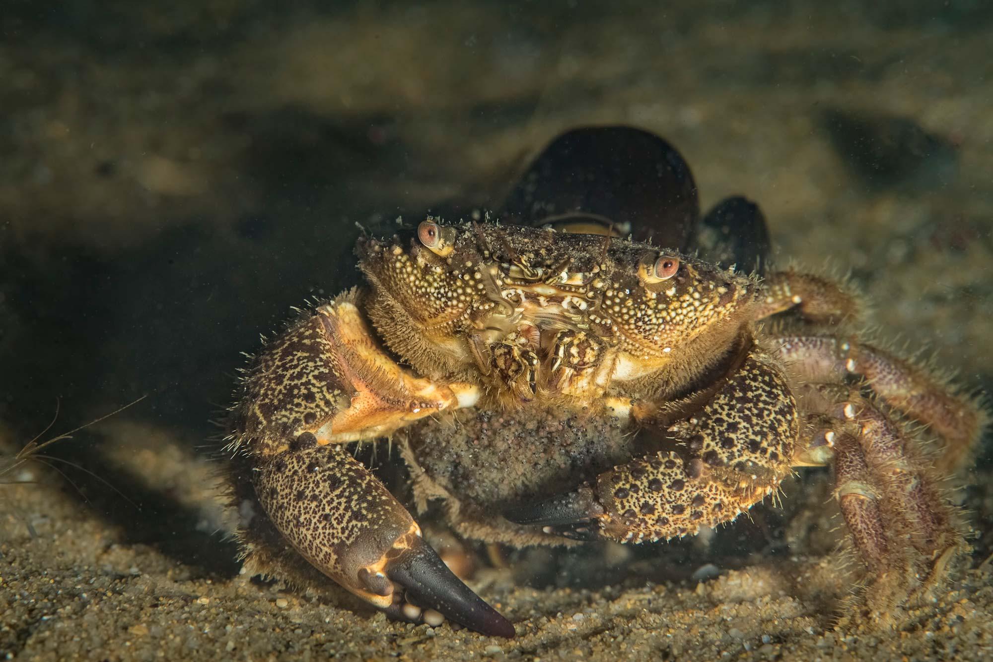 Подводните обитатели на Черно море през нощта