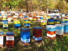 Пчеларска ферма