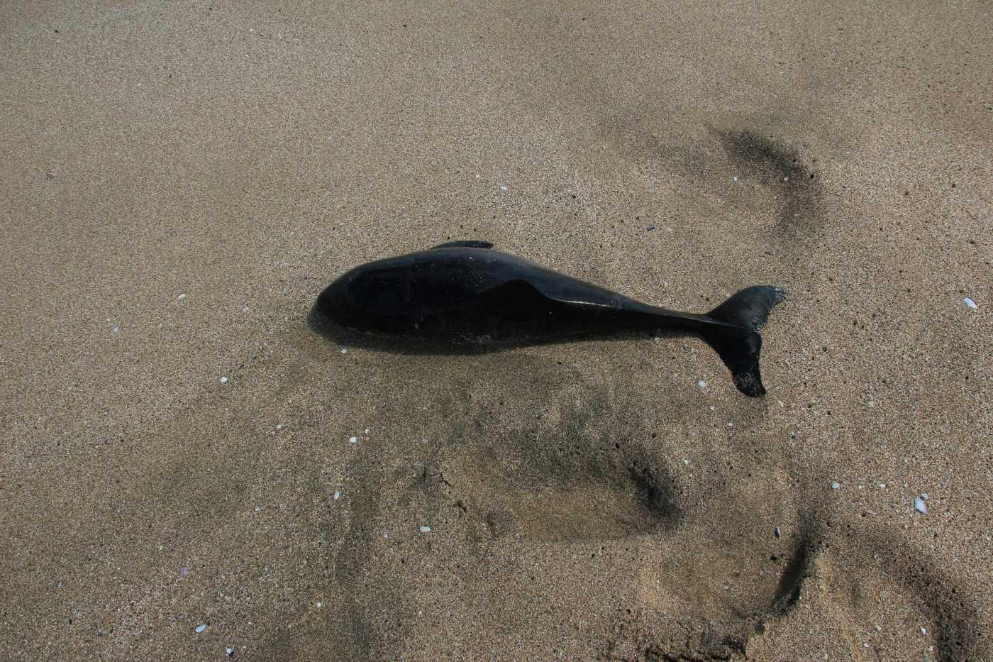 Експерти са обезпокоени от масово измиране на делфини