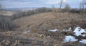 """Незаконна сеч в земеделски територии на Парк """"Странджа"""", текат проверки"""