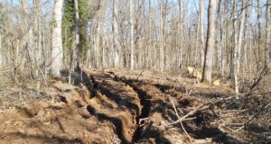 Прекомерна сеч, лоша инфраструктура и технологична изостаналост вредят на горите в природен парк Странджа