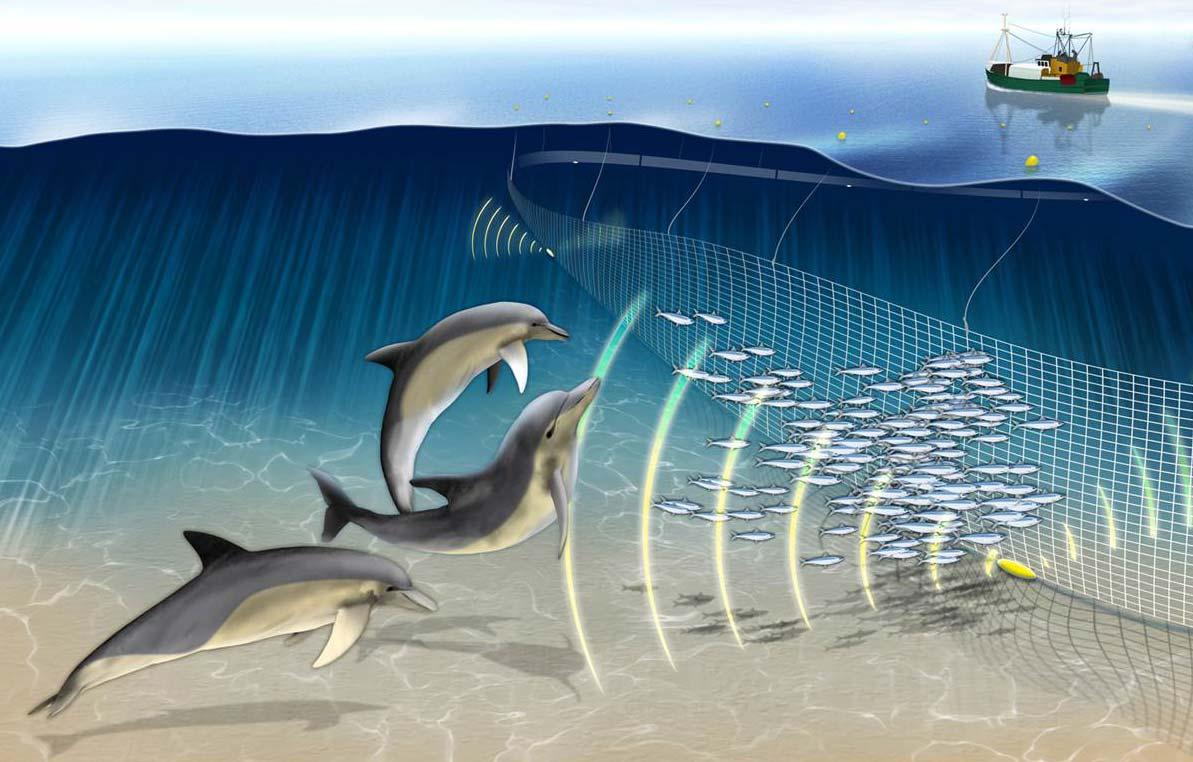 Нов телефон за сигнали за мъртви делфини обявиха от РИОСВ