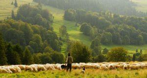 Животновъдите от Странджа ще получат безвъзмездно животни от свои колеги