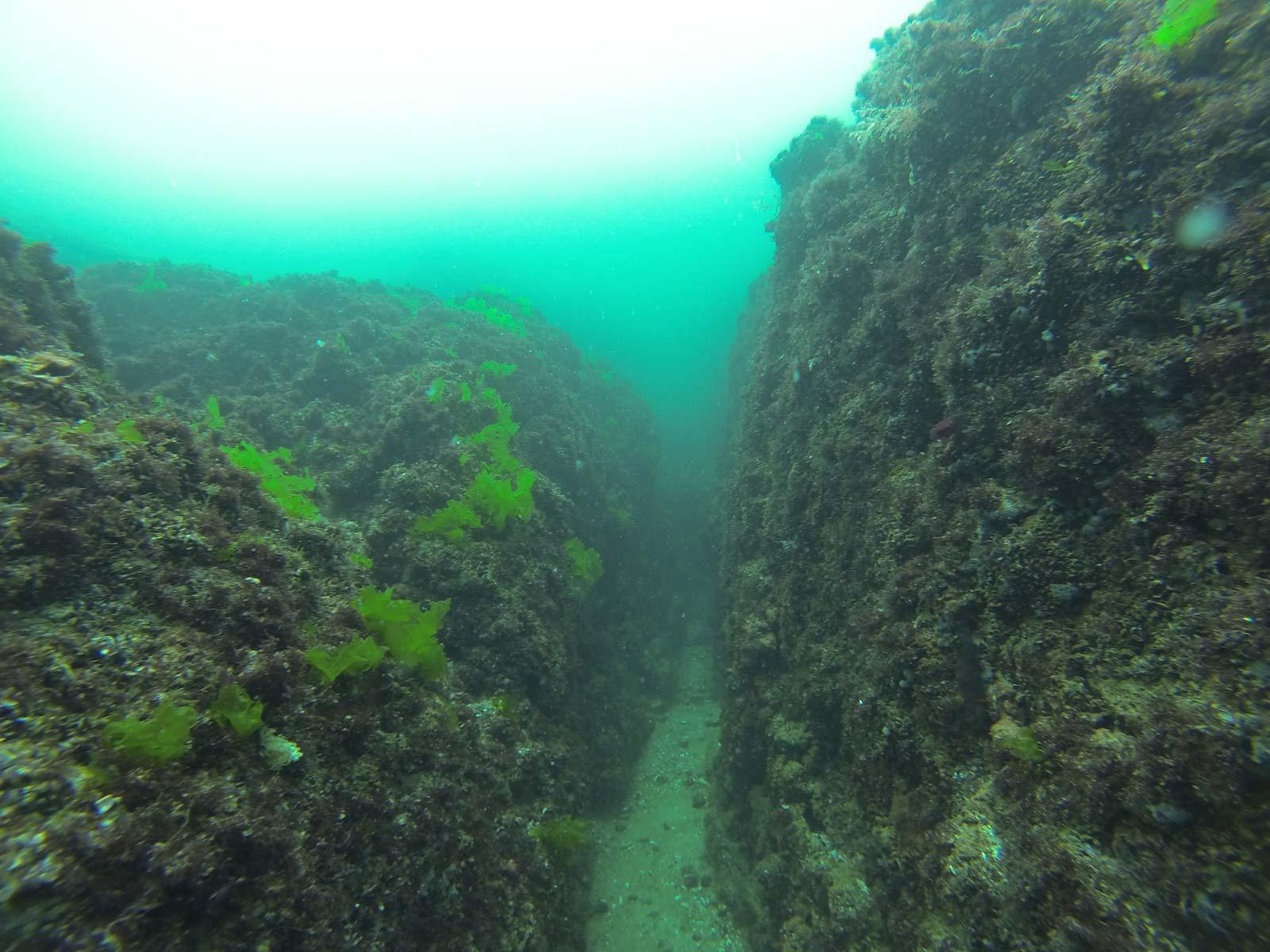 Подводна фотография от Ахтопол